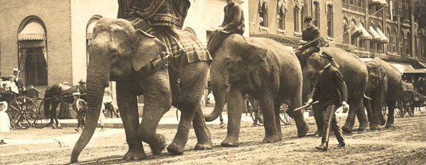 Circus elephants at Maple and West Main, July 2, 1907