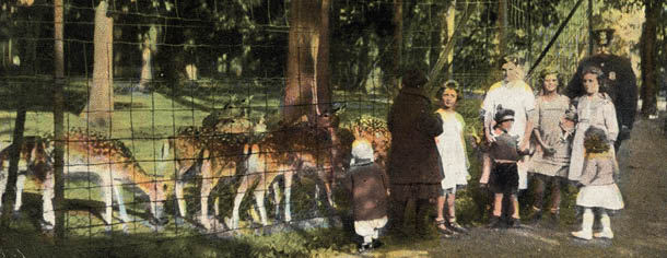 Petting zoo at East Side Park, Paterson, NJ, 1920